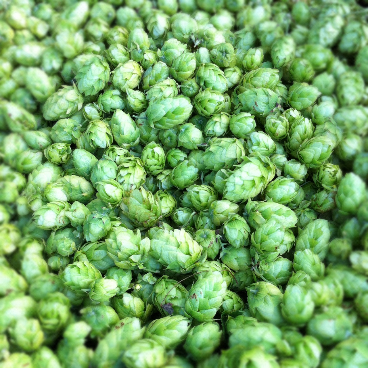 We Love Hops!